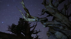 3 Axis Motion Control Astro Time Lapse of Stars & Bristlecone Pine Trees -Long- Stock Footage