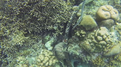 Sea snake on coral reef Stock Footage