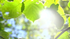 Summer nature. Sun shining through green leaves Stock Footage