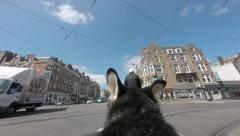 Dog camera: crossing intersection Stock Footage