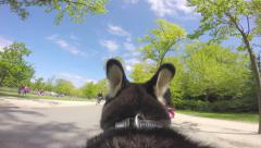 Dog cam: running in park Stock Footage