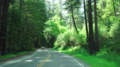 California Coastal Redwoods, forest traffic Stock Footage