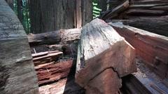 California Coastal Redwoods, fallen giant Stock Footage