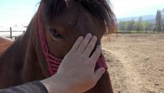 4k Horse caresses closeup Stock Footage