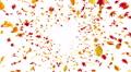 Autumn Leaf front Bw 4K Footage
