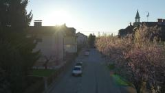 AERIAL: Cherry trees blooming in sunny suburbia - stock footage