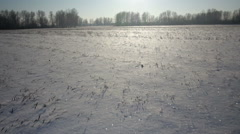 Winter park in snow. Snowy field and blue sky Stock Footage