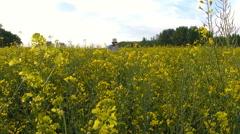 Senior farmer in rapeseed field Stock Footage