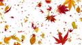 Autumn Leaf tornado Cw 4K Footage