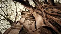 Tree roots attached to a tomb Stock Footage