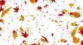 Autumn Leaf tornado Dw 4K Footage