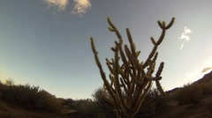 Morning Cactus in the Desert - Time Lapse Stock Footage