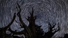 Astro Time Lapse of Star Trails over Ancient Bristlecone Pine Tree -Tilt Up- Stock Footage