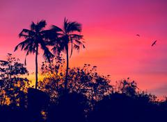 sunset with birds - stock photo
