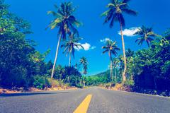Nice asfalt road with palm trees Stock Photos