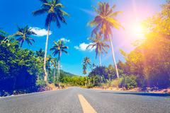 Nice asfalt road with palm trees - stock photo
