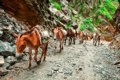 Trekking in Nepal - stock photo