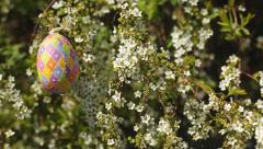 Overhead Easter Egg On White Flower Bush (New Bradford Pear) Stock Footage