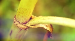 The green stem of the plant crawling insects. Summer Macro shooting. Stock Footage