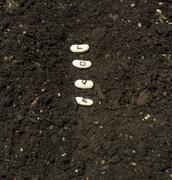 Planting Seeds Of Love In A Garden Row - stock photo