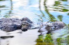 Amphibian Prehistoric Crocodile - stock photo