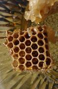 hive honey - stock photo