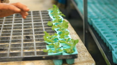 working in the hydroponics farm - stock footage