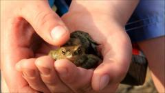Boy cuddling frog in his hand Stock Footage