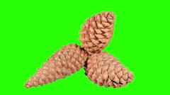 Disclosure of pine cones green screen, (Pinus L.), Full HD. Stock Footage