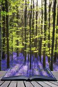 Creative concept image Stunning bluebell flowers in Spring forest landscape - stock photo