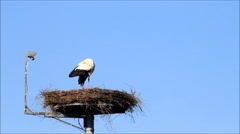 Stork on nesting place, security camera, blue sky Stock Footage