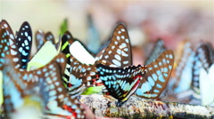 Butterflies in the wild in Thailand - stock footage