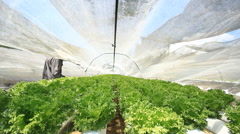 Checking in the hydroponics farm Stock Footage