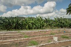 Cuba Palm Garden Tropical Tropic Stock Photos