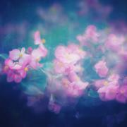 Abstract Nature Background with Pink Flowers Stock Photos