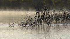 Black trees in water on a quite foggy morning on a lake, Netherlands Stock Footage
