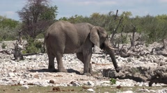 Elephants at the Waterhole (Namibia) Stock Footage