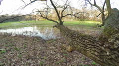 Flooded meadow Stock Footage
