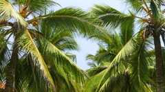 Heart shape from the leaves of coconut palms 4k Stock Footage