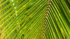 Palm leaves closeup background 4k Stock Footage