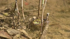 Frog in the filth - stock footage