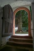 Magic Castle Gate Door  Stairs - Old Tree - Garden - Backyard - Forecourt - stock photo