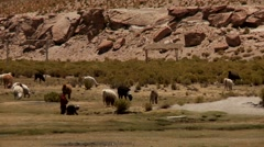 Landscape in Andes, Altiplano, Bolivia - stock footage