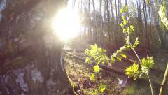 Early morning spring forest sun rays breaking through spider net fisheye lens Stock Footage