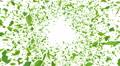 Green Leaf front BCw 4K 4k or 4k+ Resolution