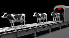 Cows on the conveyor belt, 4K. Seamless loop, alpha channel. Stock Footage