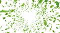 Green Leaf front Bw 4K Footage