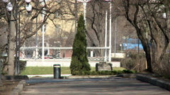 View of thuja growing in city park Stock Footage