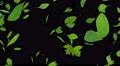 Green Leaf tornado Ab 4K Footage