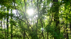 Sunshine coming through green trees in a forest - panning - stock footage